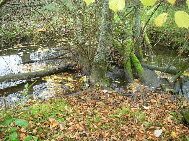 Bois faisant obstruction au bon écoulement d'une rivière