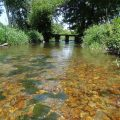 Actions sur la continuité écologique sur la Boivre